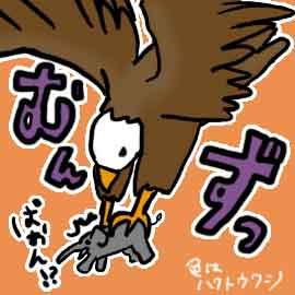 有名な鳥10選_挿絵3